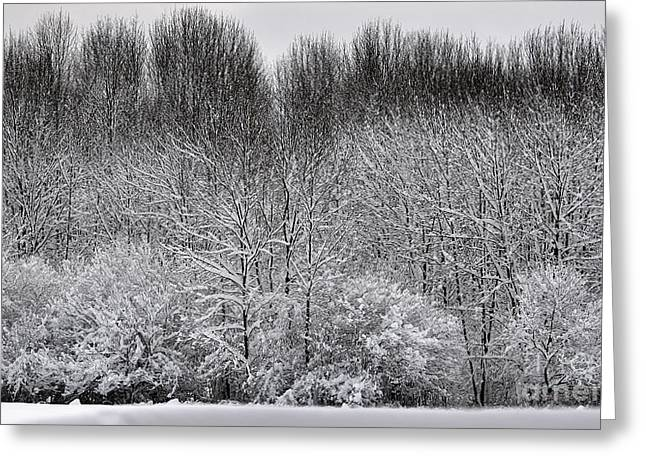 First Snow Drawings Greeting Cards - First Snow Greeting Card by Diane E Berry