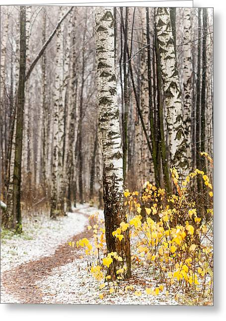 First Snow. Hidden Path Greeting Card by Jenny Rainbow