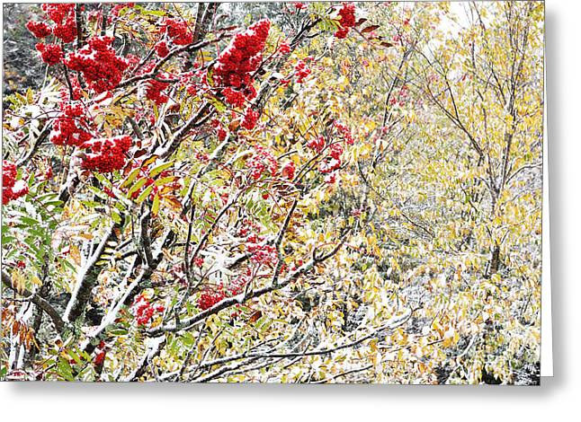 West Virginia Snow Scene Greeting Cards - First Snow Mountain Ash Greeting Card by Thomas R Fletcher