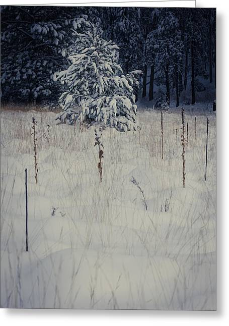 Christmas Tree In Nature Greeting Cards - First Snow Greeting Card by Scott Sawyer