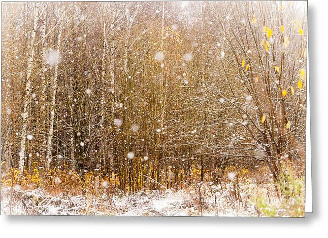 Snow Falling Greeting Cards - First Snow. Snow Flakes I Greeting Card by Jenny Rainbow