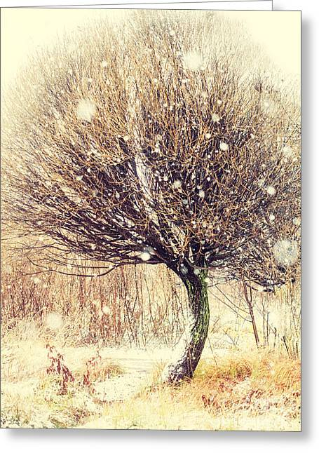 Snow Falling Greeting Cards - First Snow. Snow Flakes Greeting Card by Jenny Rainbow