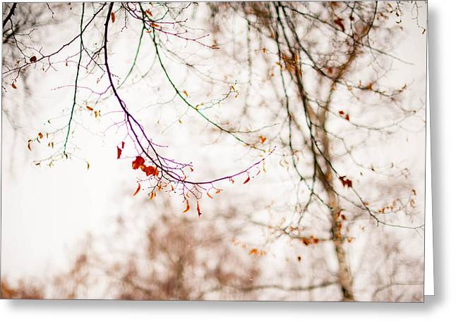 First Snow. Touch Of Gold Greeting Card by Jenny Rainbow