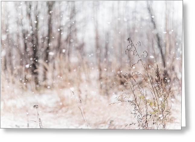 First Snow. Winter Mood Greeting Card by Jenny Rainbow