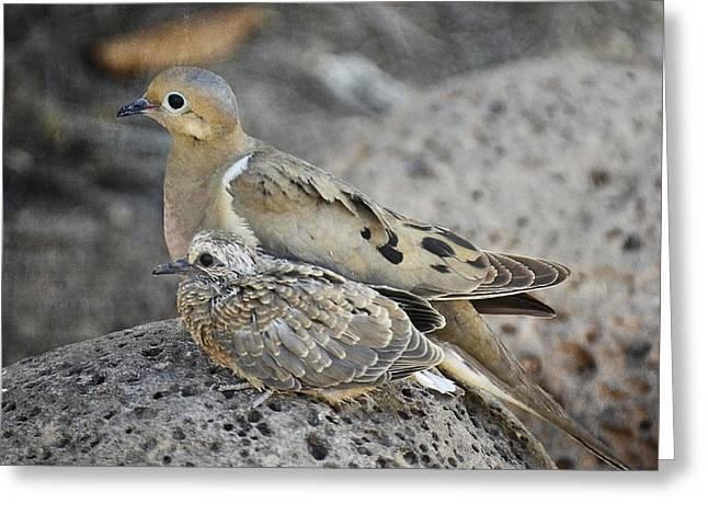 Mourning Dove Greeting Cards - First Steps  Greeting Card by Saija  Lehtonen