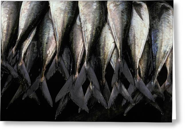 Fresh Produce Greeting Cards - Fish For Sale Hanging In A Coastal Fish Greeting Card by Jason Edwards