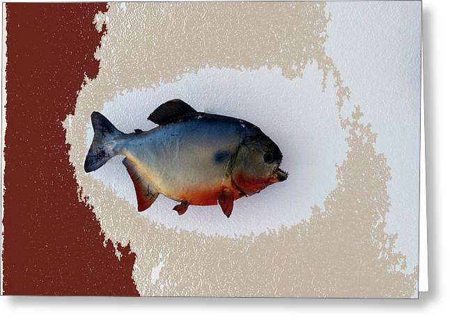 Aquarium Fish Greeting Cards - Fish Mount Set 12 C Greeting Card by Thomas Woolworth