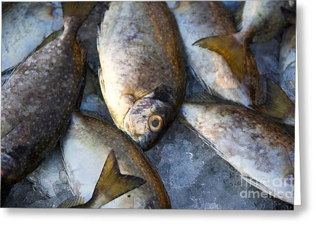 Grocery Store Greeting Cards - Fish on Ice Greeting Card by David Buffington