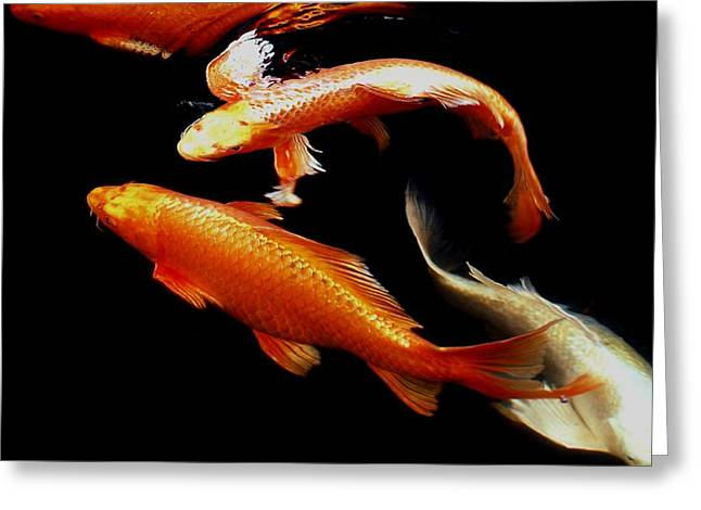 Oranda Greeting Cards - Fish Swimming Greeting Card by Don Mann