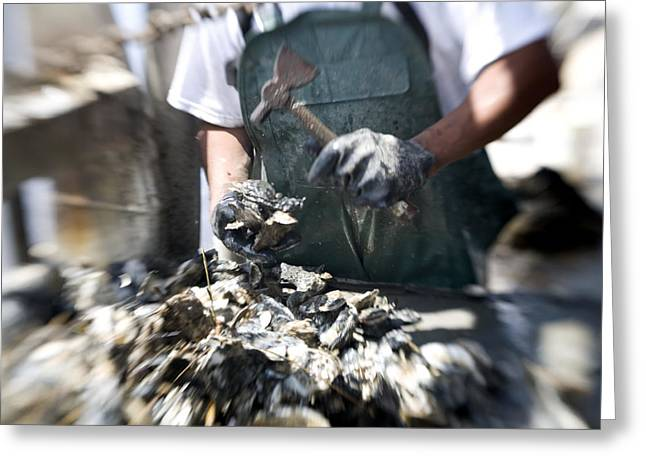 Southern Province Greeting Cards - Fisherman Separating Clumps Of Oysters Greeting Card by Tyrone Turner