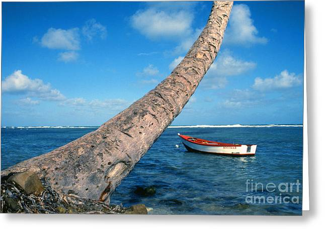 Puerto Rico Greeting Cards - Fishing boat and Palm trunk Greeting Card by Thomas R Fletcher