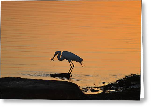 St Petersburg Florida Greeting Cards - Fishing Egret Greeting Card by Bill Cannon