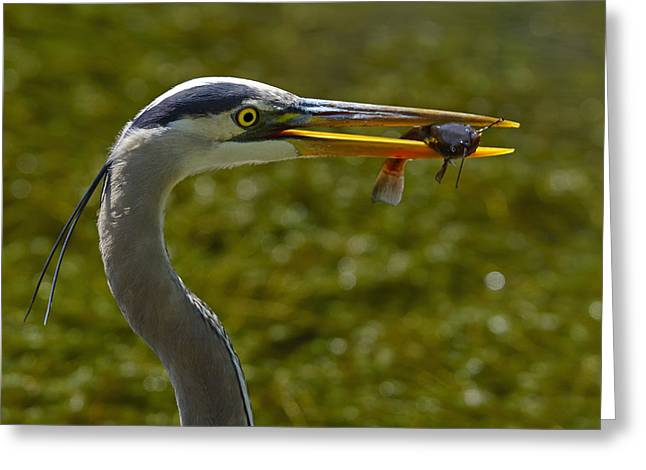 Pout Greeting Cards - Fishing For A Living Greeting Card by Tony Beck