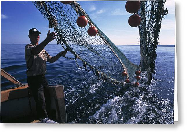 Mbl Greeting Cards - Fishing For Scientific Specimens Greeting Card by Volker Steger