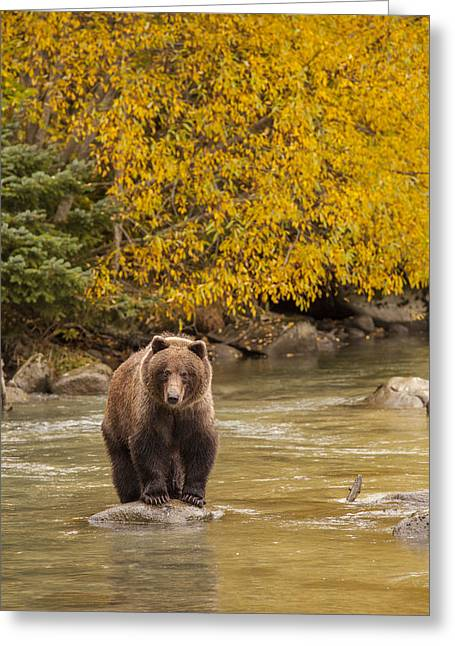Southeast Alaska Greeting Cards - Fishing in the Fall Greeting Card by Tim Grams