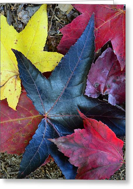 Five Fall Leaves Greeting Card by Sandi OReilly