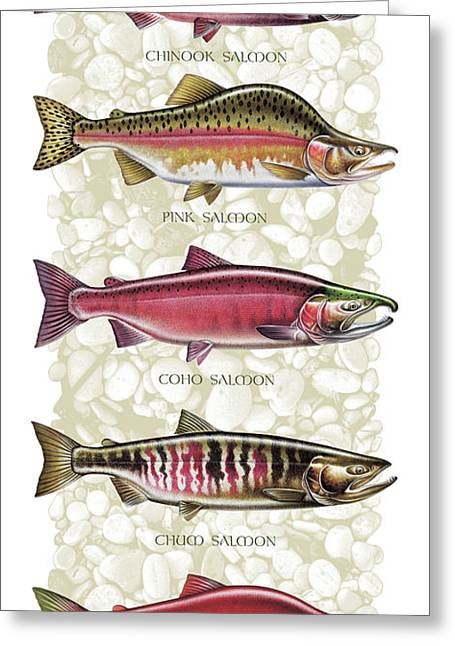 Jq Licensing Paintings Greeting Cards - Five Salmon Species  Greeting Card by JQ Licensing