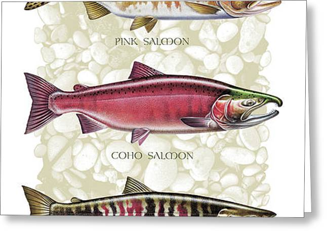 Five Salmon Species  Greeting Card by JQ Licensing