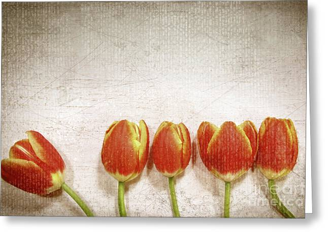 Border Photographs Greeting Cards - Five tulips Greeting Card by Sandra Cunningham