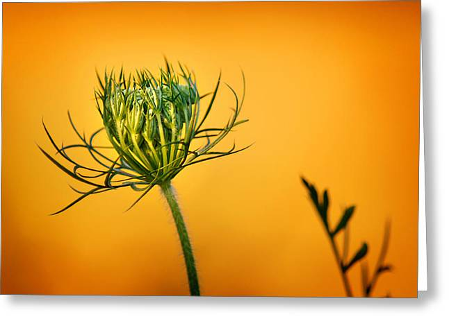Wisconsin Wildflowers Greeting Cards - Fixn to Bloom Greeting Card by Bill Pevlor