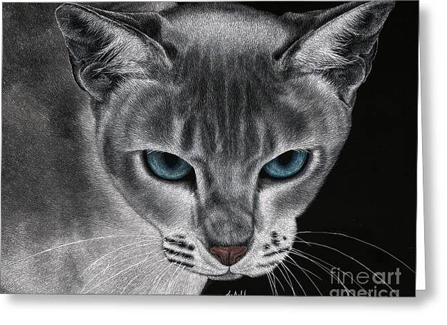 Scratchboard Greeting Cards - Flame Point Siemese Cat Greeting Card by Sheryl Unwin