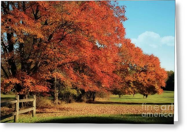 Orchard Digital Art Greeting Cards - Flame Trees Greeting Card by Lois Bryan