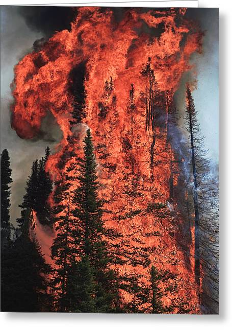 Fir Trees Greeting Cards - Flames Hurtle Through A Thick Stand Greeting Card by Mark Thiessen