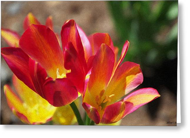 Red Flower Greeting Cards - Flaming Tulips Greeting Card by Jeff Kolker