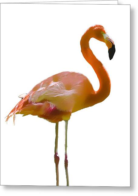 Great Birds Mixed Media Greeting Cards - Flamingo 1  Greeting Card by Robert OP Parrish