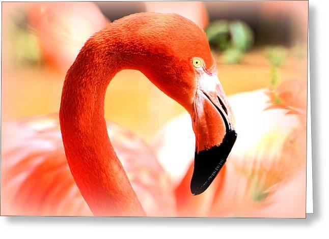 Elizabeth Budd Greeting Cards - Flamingo Greeting Card by Elizabeth Budd