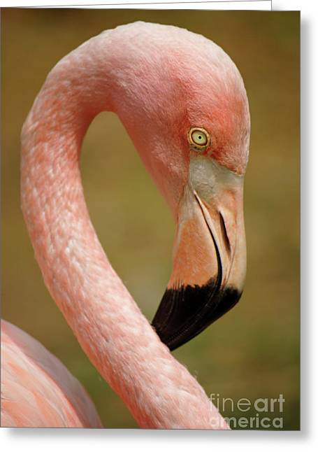 Aviary Greeting Cards - Flamingo Head Greeting Card by Carlos Caetano