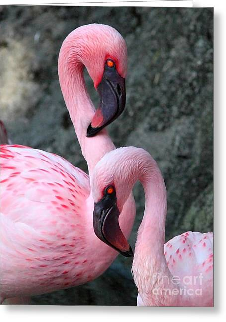 Grey And Pink Greeting Cards - Flamingo Love Birds Greeting Card by Carol Groenen