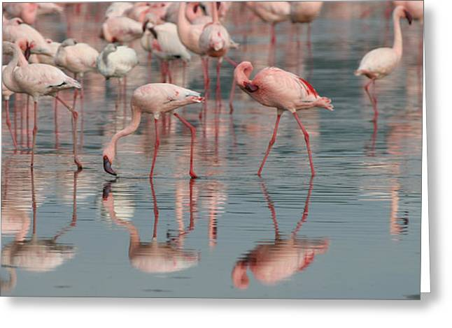 Lessor Greeting Cards - Flamingo Parade Greeting Card by Joseph G Holland