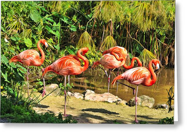 Bird Rookery Swamp Greeting Cards - Flamingo Party Greeting Card by Betty Eich
