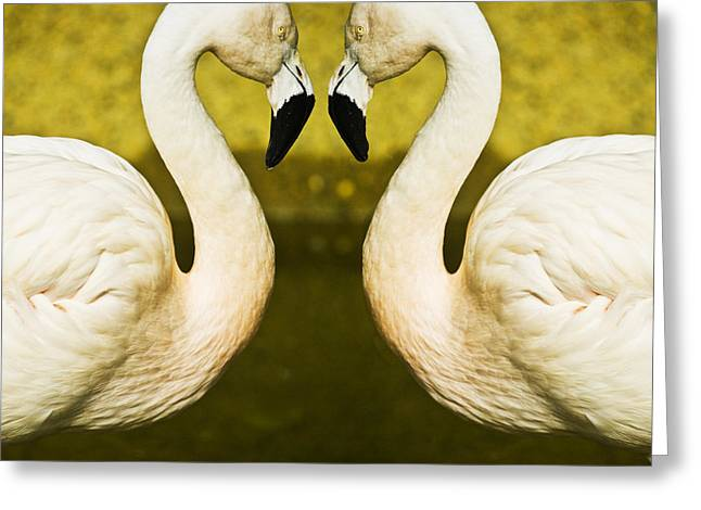 Flamingo Greeting Cards - Flamingo reflection Greeting Card by Sheila Smart