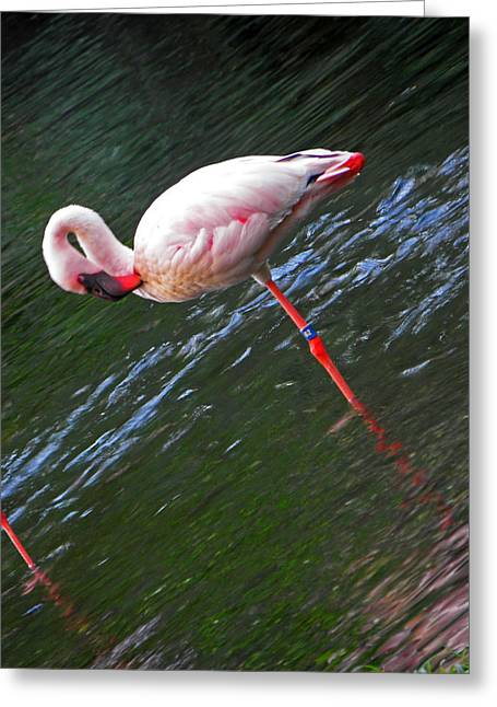 Water Fowl Greeting Cards - Flamingo Style Greeting Card by Elizabeth Hoskinson