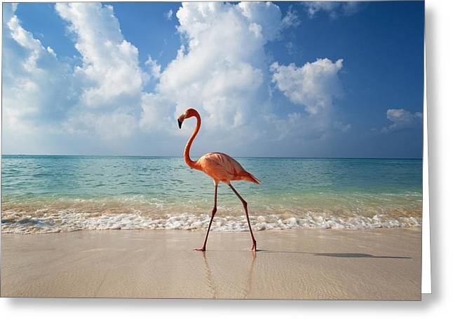 Bayahibe Greeting Cards - Flamingo Walking Along Beach Greeting Card by Ian Cumming