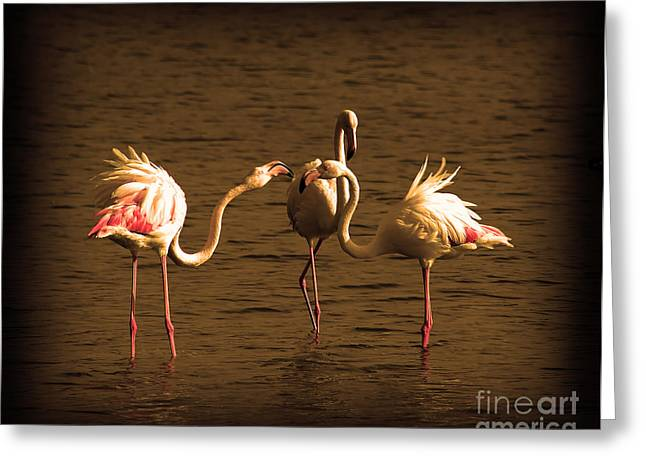 Peaceful Scenery Pyrography Greeting Cards - Flamingos Argue Greeting Card by Radoslav Nedelchev