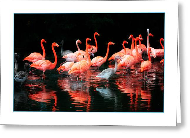 Flamingo Greeting Cards - Flamingos Greeting Card by Mal Bray