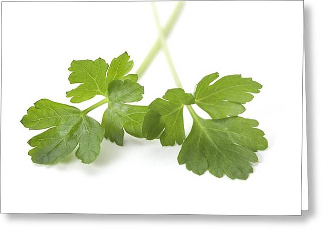Italian Kitchen Greeting Cards - Flat Leaf Parsley Leaves Greeting Card by Jon Stokes