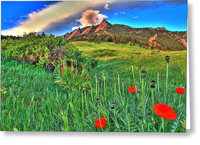 University Of Boulder Colorado Greeting Cards - Flatirons and Poppies Greeting Card by Scott Mahon