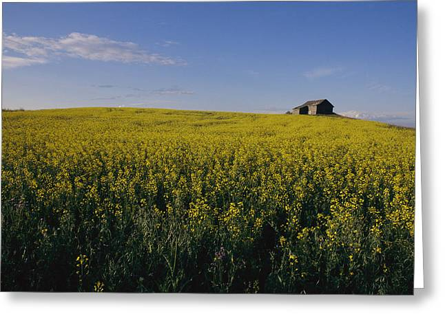 Farmers And Farming Greeting Cards - Flax Fields Across The Saskatchewan Greeting Card by Michael S. Lewis