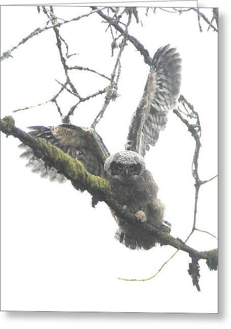 Wildlife Refuge. Greeting Cards - Fledgling Great Horned Owl Greeting Card by Angie Vogel