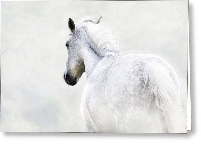 Seen Greeting Cards - Fleeing Grey Horse Greeting Card by Ethiriel  Photography