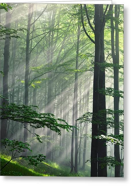 Forests Greeting Cards - Fleeting Beams Greeting Card by Evgeni Dinev