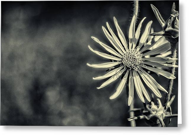 Nik Silver Efex 2 Greeting Cards - Fleur Jaune Greeting Card by CJ Schmit