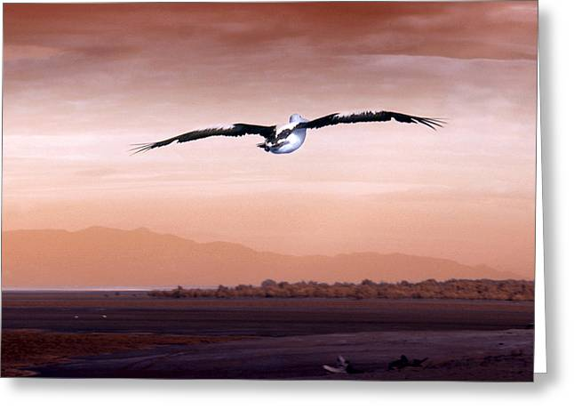 Flying Animal Greeting Cards - Flight Greeting Card by Holly Kempe