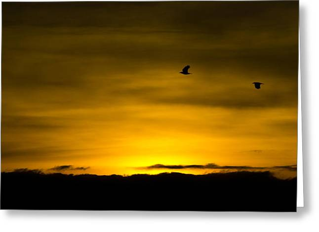 Reverence Greeting Cards - Flight of the golden Greeting Card by Steven Poulton