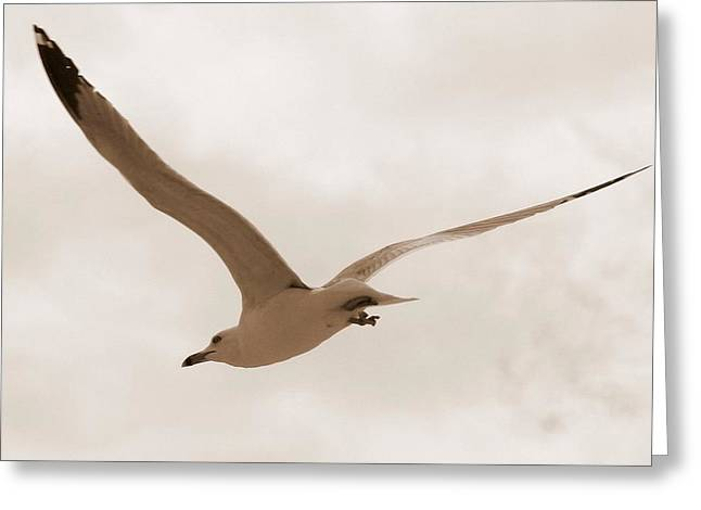 Sea Birds Greeting Cards - Flight of the Gull Greeting Card by Lisa Scott