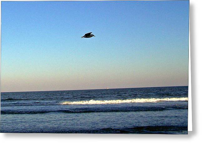 Patricia Taylor Greeting Cards - Flight of the Seagull Greeting Card by Patricia Taylor